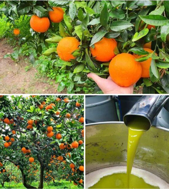 Orangen und Öl